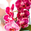 Beautiful orchid — Stock Photo #11960632