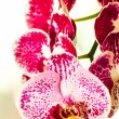 Beautiful orchid — Stock Photo