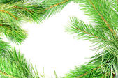 Frame from the pine branches — Stock Photo