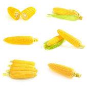 Corn cobs set — Stock Photo