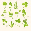 Plants silhouettes - Stock Vector