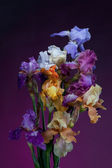 Bouquet of iris flowers — Stock Photo
