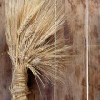 Wheat ears — Stock Photo #10870251