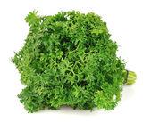 Fresh curly parsley — Stock Photo
