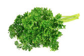 Fresh parsley herb — Stock Photo