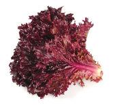 Fresh red lettuce — Stock Photo