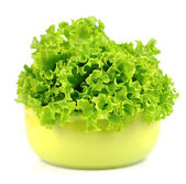 Fresh green lettuce salad — Stock Photo