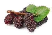 Mulberry branch — Stock Photo