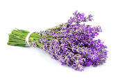 Bouquet of a fragrant lavender — Stock Photo