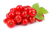 Red Currant — Stockfoto
