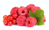 Sweet raspberry with leafs — Stockfoto