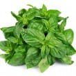 Stock Photo: Fresh basil leaves