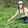 Woman gathers nettle — Stock Photo