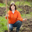 Royalty-Free Stock Photo: Woman plants tree  in spring garden