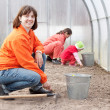 Family works in greenhouse — Stock Photo