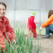 Women with child works at hothouse — Stock Photo #11498625