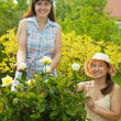 Female gardeners in rose plant — Stock Photo