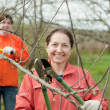 Women pruned branches in the orchard - Stock Photo