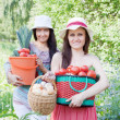 Happy women with vegetables harvest — Stock Photo