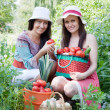 Stock Photo: Women with vegetables harvest