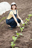 Woman planting cabbage seedling — Stock Photo