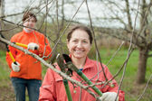 Women pruned branches in the orchard — Stock Photo