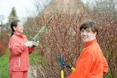 Women pruning bush in garden — Stock Photo
