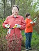 Women cutting shrubbery — Stock Photo