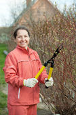 Mature woman trimmed branches — Stock Photo