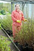 Woman chooses bush sprouts — Stock Photo
