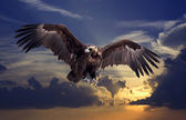 Flying black vulture — Stock Photo