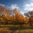 Stock Photo: Autumn lanscape with oak grove