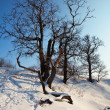 Stock Photo: Winter lanscape