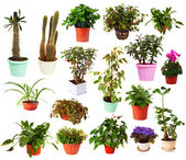 Set of houseplant in pots. Isolated on white — Stock Photo