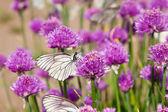 Bloemen plant met vlinders — Stockfoto