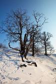 Winter lanscape — Stock Photo