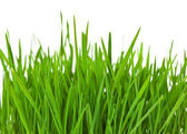 Grass border — Stock Photo