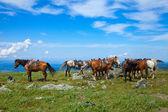 Paar opdraaien paarden — Stockfoto
