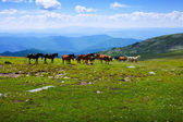 Landschap met kudde paarden — Stockfoto