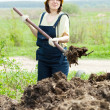 Woman throws  manure  in  field - Stock Photo