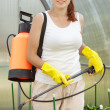 Female gardener spraying pepper  plant - Stock Photo