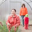 Family works in greenhouse — Stock Photo #12497361