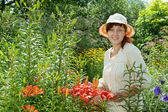 Gardener in lily plant — Stock Photo