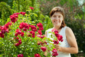Gardener in roses plant — Stock Photo