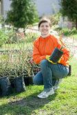 Gardener chooses bush sprouts — Stock Photo
