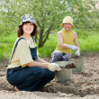 Gardeners fertilizes  soil in garden - Lizenzfreies Foto