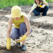 Women sows seeds in soil - Photo