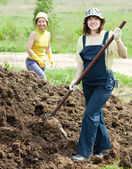 Women works with animal manure — Foto Stock