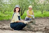 Gardeners fertilizes soil in garden — Stock Photo