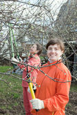Women pruned branches in orchard — Stock Photo